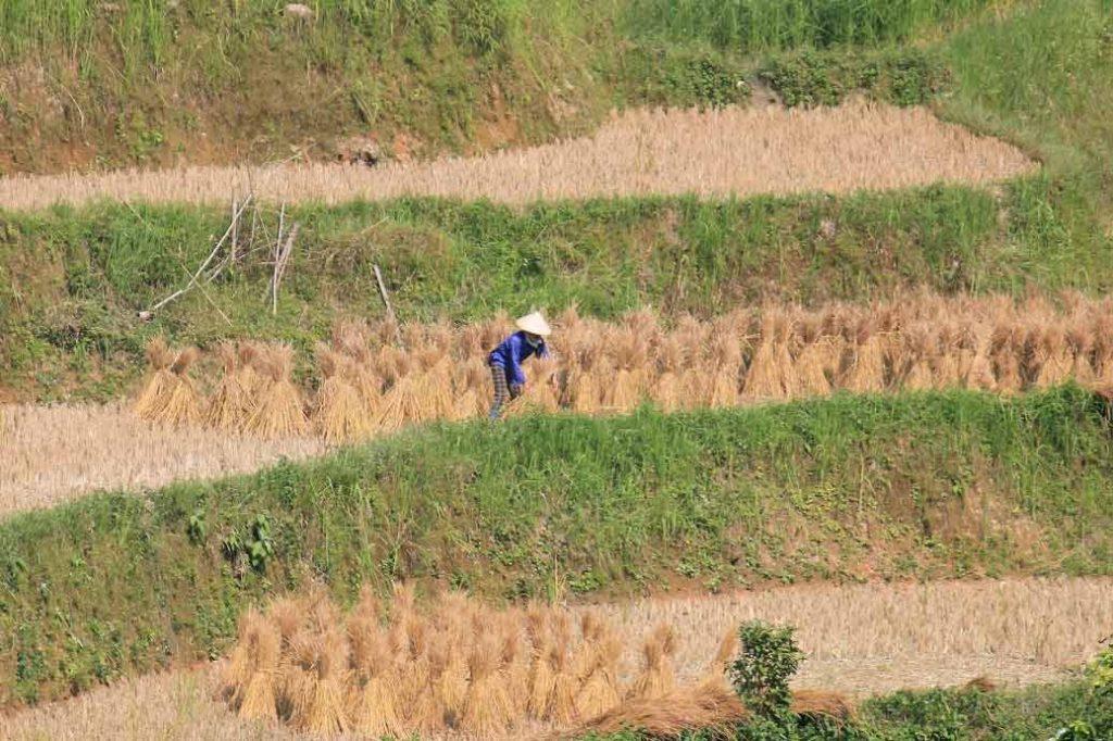 farmer in hoang su phi