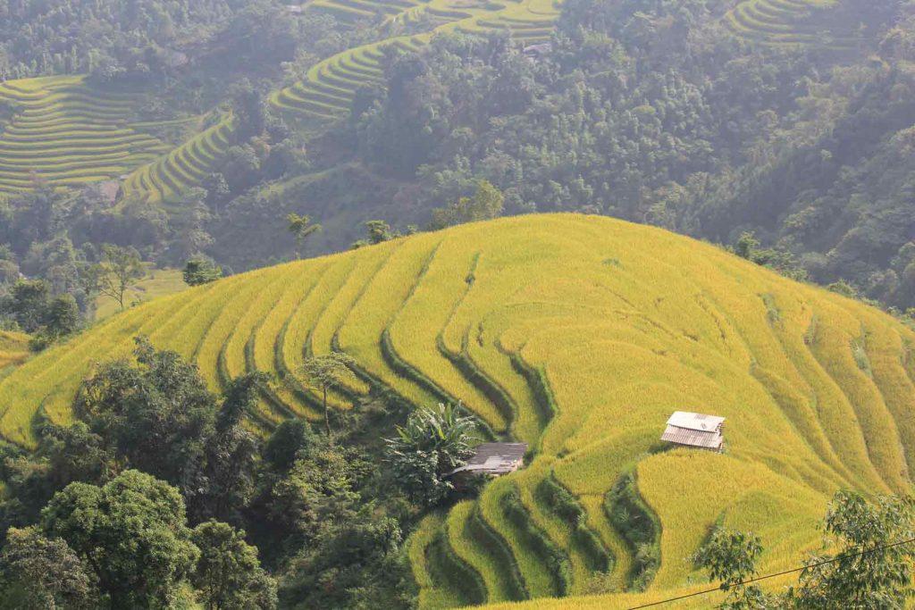 hoang su phi terrace fields