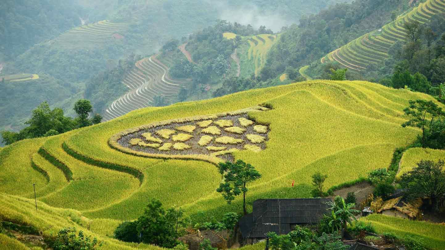 hoang su phi rice fields